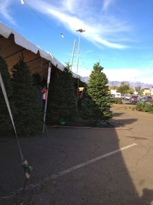 At the Christmas tree lot