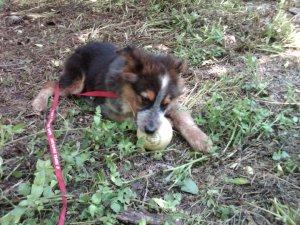 Little puppy Wrigs three years ago