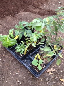 New plants: check!