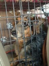 He's a good passenger