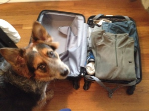 Wrigley helping me pack