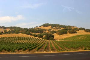 The view on the drive from Sonoma to Napa