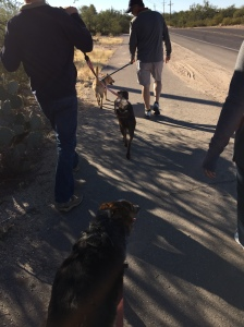 Walking with the dogs to Le Buzz. We were moderately successful.