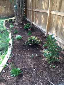 Back flowerbed once we planted the Indian hawthorn