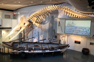 The Whaling Museum