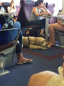 One of the golden doodles on board